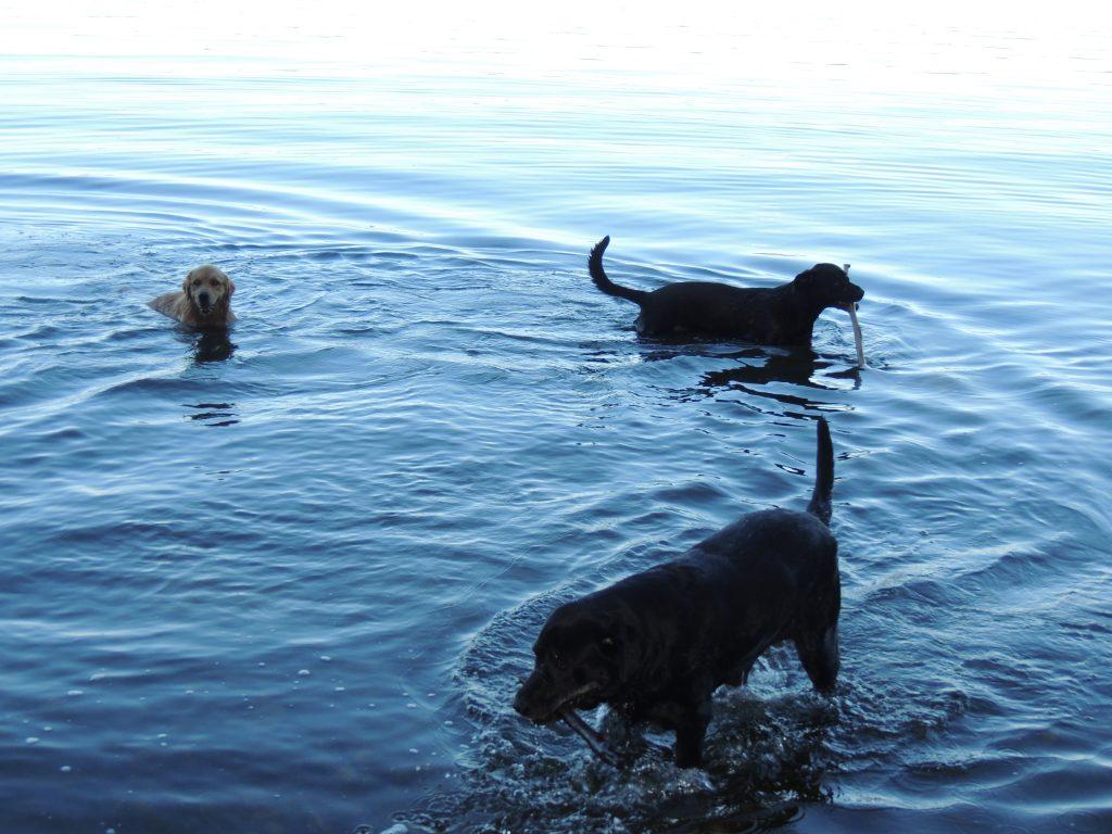 Dog Friendly Lake Access