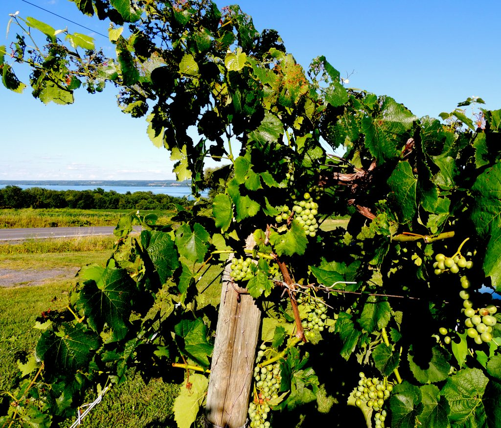 Wine Trail in the Finger Lakes