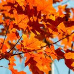 Stay in the Finger Lakes for great fall foliage