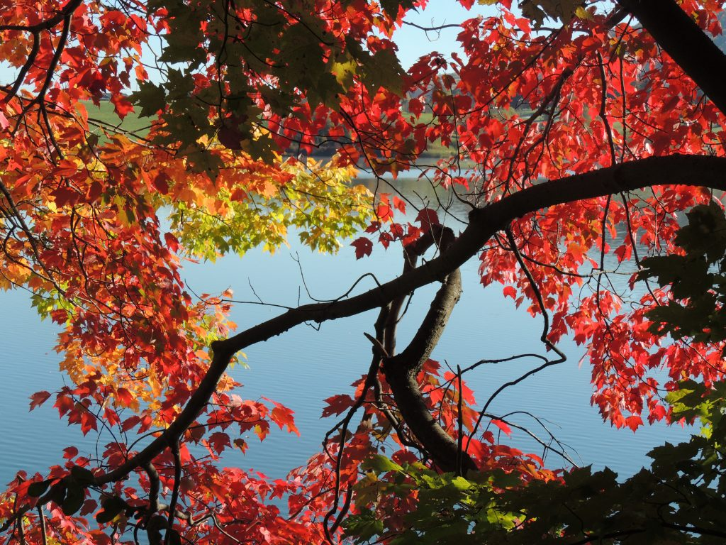 Finger Lakes Foliage