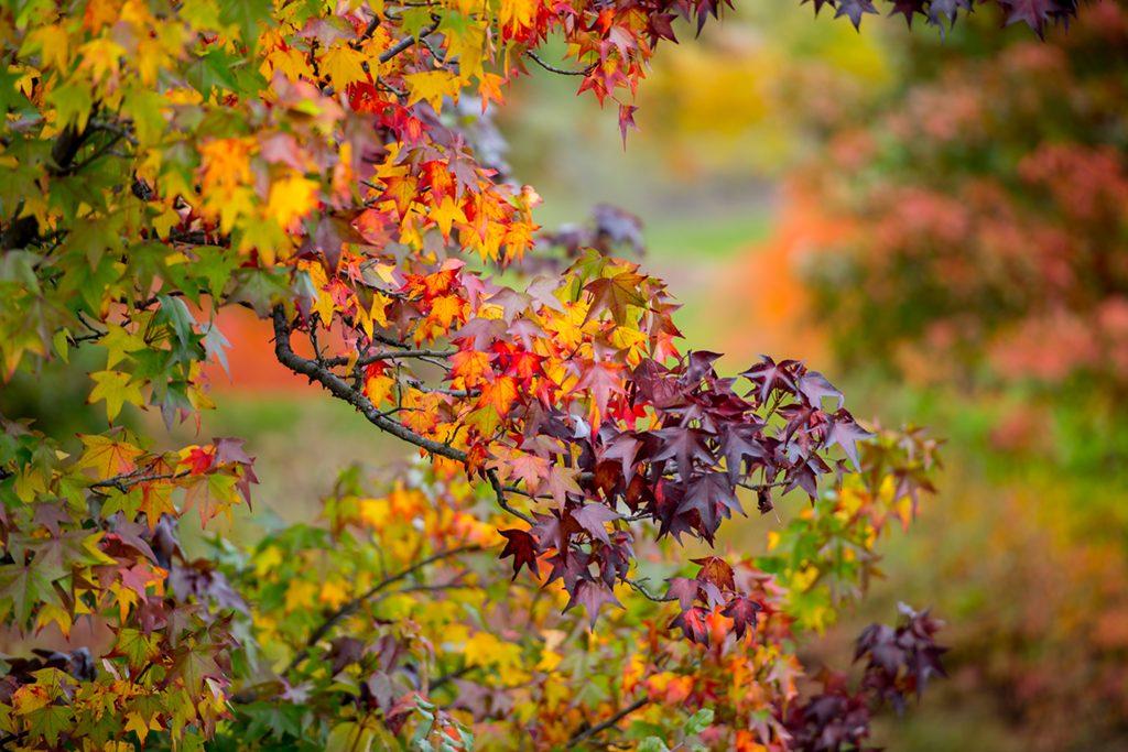 Upstate Foliage