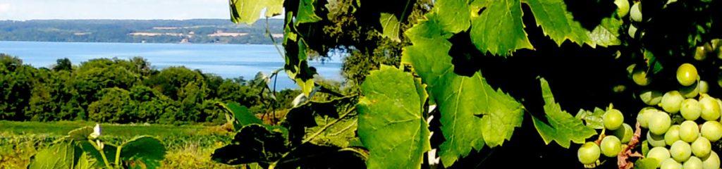 Visit the Finger Lakes Wine Trails