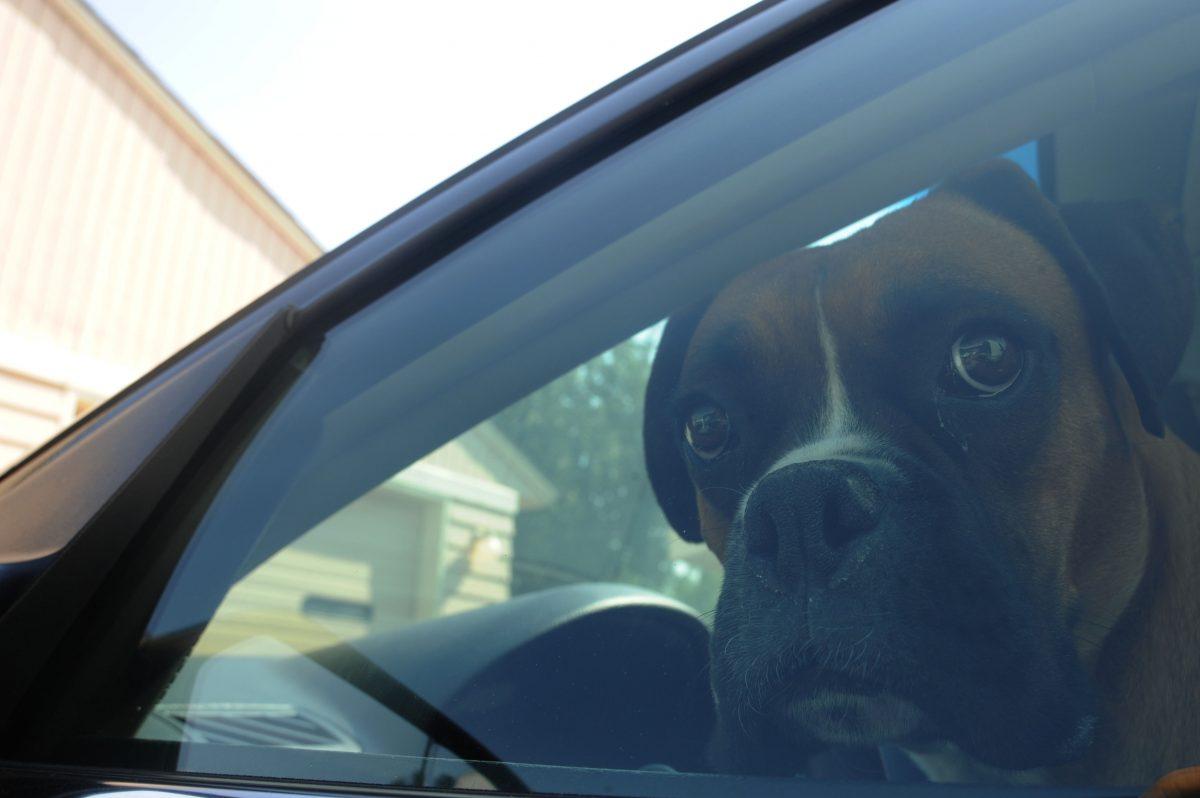 Dog Travel Training Advice